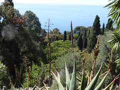 Giardini botanici Hanbury - Ventimiglia