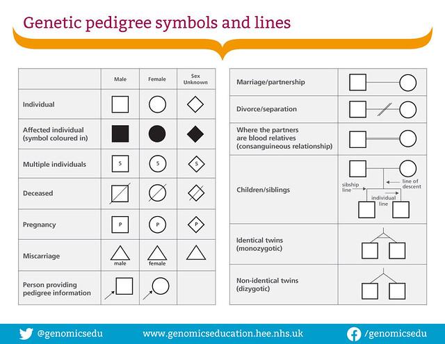 Pedigree-symbols-and-lines-1000px