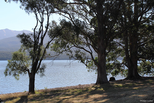 Au bord du lac Te Anau