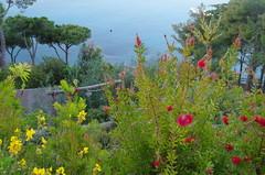Natura : Fiori, piante, animali, vegetazione