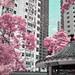 Buildings In The Central Neighborhood - Hong Kong