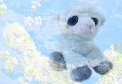 """Lambs are clouds with legs."""