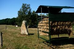 Le « Menhir des Taillis » près de la Gacilly - Morbihan - Septembre 2018 - 02