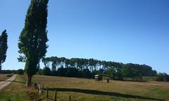 Le « Menhir des Taillis » près de la Gacilly - Morbihan - Septembre 2018 - 01