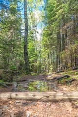 A walk through Acadia National Park