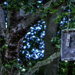 Blech im Baum