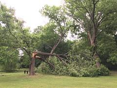 Tree Damage and Loss at Jenks East Elementary School, Tulsa