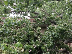 Giant Cottonwood Falls on Home