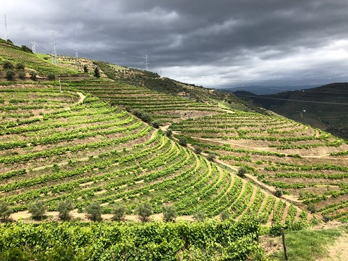 Vineyard of Douro Valley