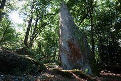 Le menhir de la « Roche-Piquée » près de la Gacilly - Morbihan - Septembre 2018 - 01