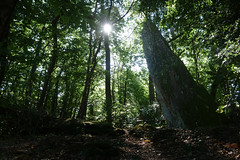 Le menhir de la « Roche-Piquée » près de la Gacilly - Morbihan - Septembre 2018 - 09