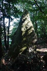 Le menhir de la « Roche-Piquée » près de la Gacilly - Morbihan - Septembre 2018 - 07