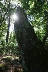 Le menhir de la « Roche-Piquée » près de la Gacilly - Morbihan - Septembre 2018 - 08