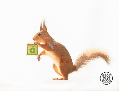 red squirrel standing beside an block with the letter Å