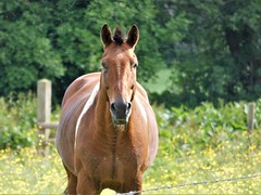 Bangor Horses