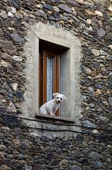 a window sized watchdog