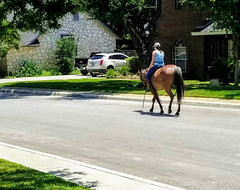 NEIGHBORHOOD BAREBACK RIDER