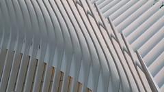A17764 / calatrava's oculus