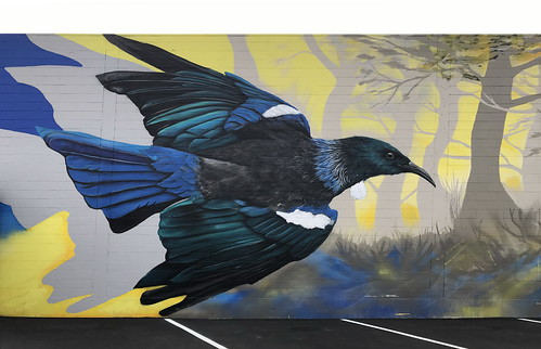 Tui Bird by DEOW.1