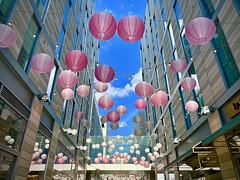 Pink lanterns in DC