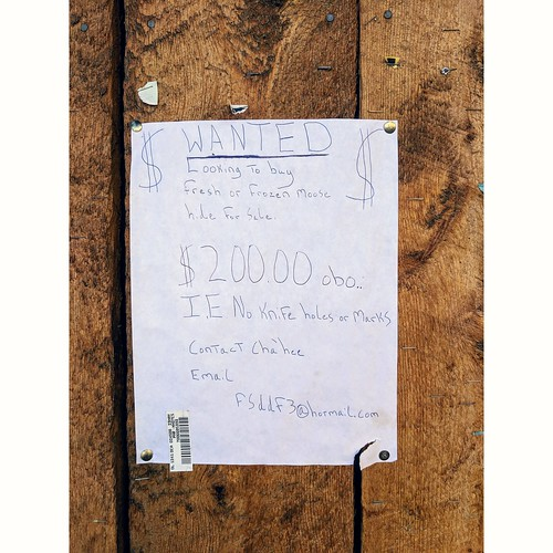 Moose Hide Wanted