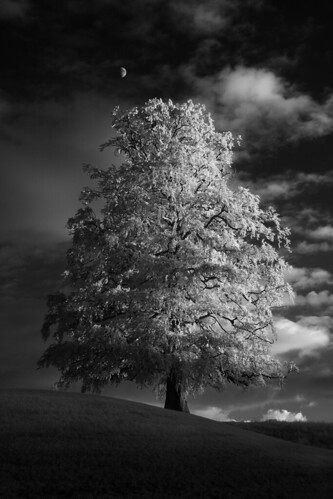The Tree IR