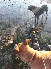 Rosie and Posie, at the beach, McSorley Creek, Saltwater State Park, Washington, USA