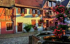 Bergheim (Haut-Rhin, Fr) – Casas de Alsacia: flores y colores - Photo of Kintzheim