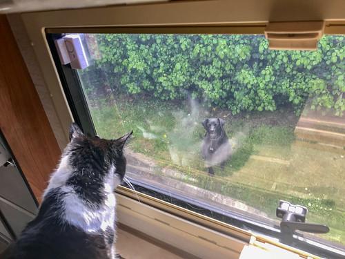 Smudge vs dog