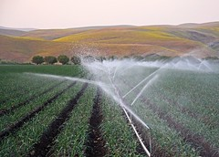 Improving the Harvest During Drought