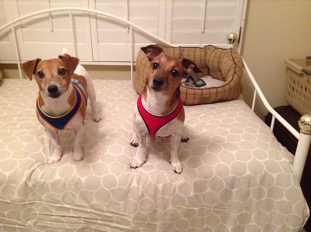 Sunny and Scout from Bonita