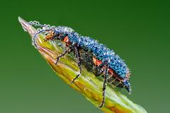 Insekten - Käfer