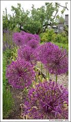 Les jardins extraordinaires - Photo of Voulangis
