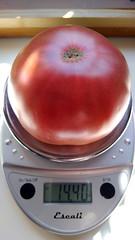 Purple Cherokee Tomato 2019