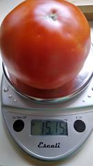 Super Fantastic Tomato 2019