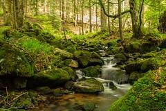 Le petit ruisseau du Sapey, La Chabanne 03250.