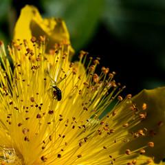 petite balade en jaune