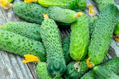 Fresh green cucumbers on grey wooden background