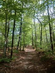 Le bois de Kerzuc à Crac'h (56)