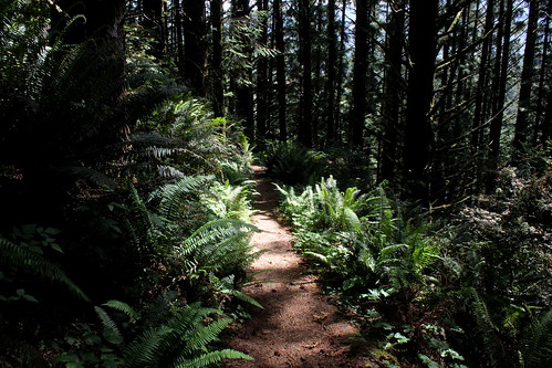 I just love a well shaded trail on a warm day