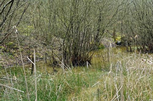 Lande de la sablière de l'Arbois à Géromont