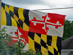 Maryland Flag In The Wind.