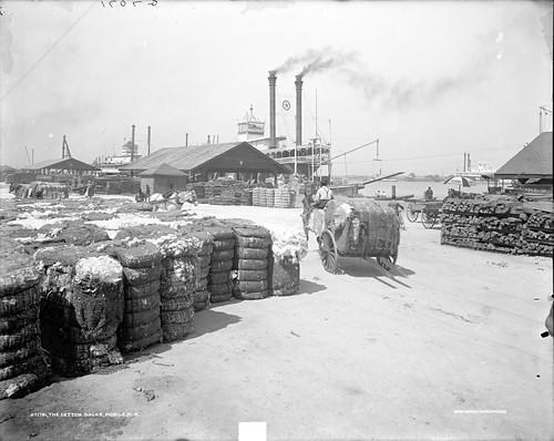 The Cotton Docks 2