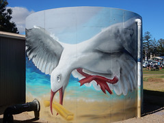 Swooping Seagull