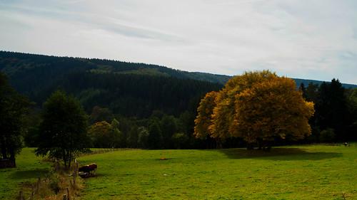 Ardennen2