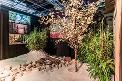 03-Cerisier et bambou - Photo of Blanquefort