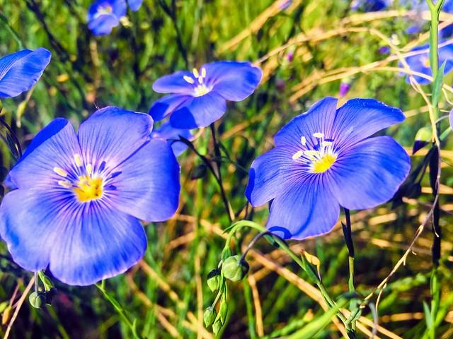 Wildflowers ...