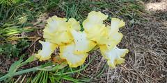 Parc floral William Farcy