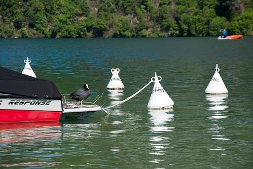 Boat nest...xx