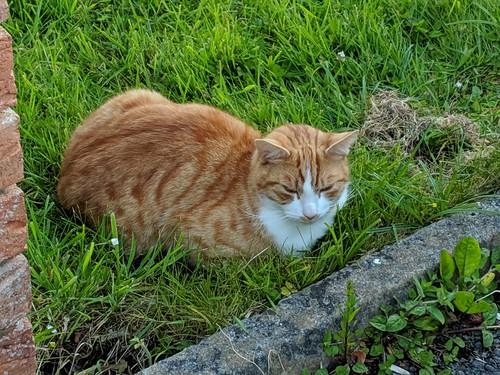 Friendly Irish Kitty